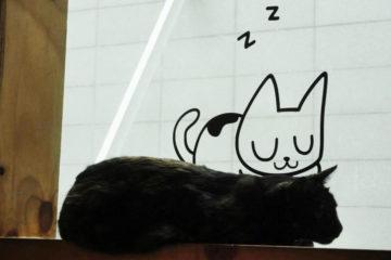cafe chat en coree du sud