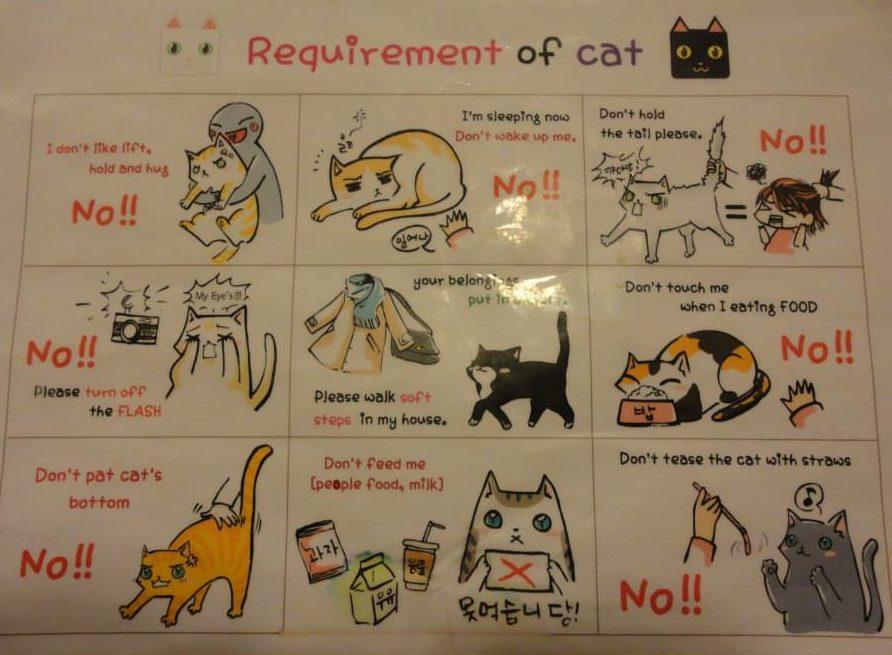 regles du cafe chat en coree du sud