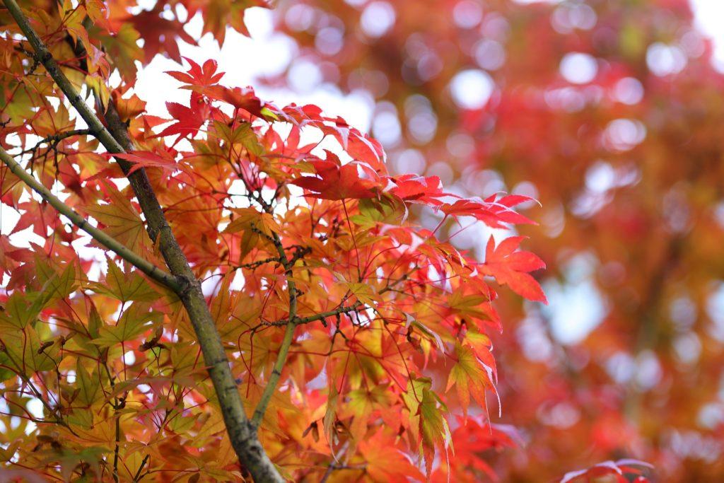 automne coree du sud