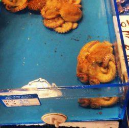 pieuvre-marche-poissonnerie